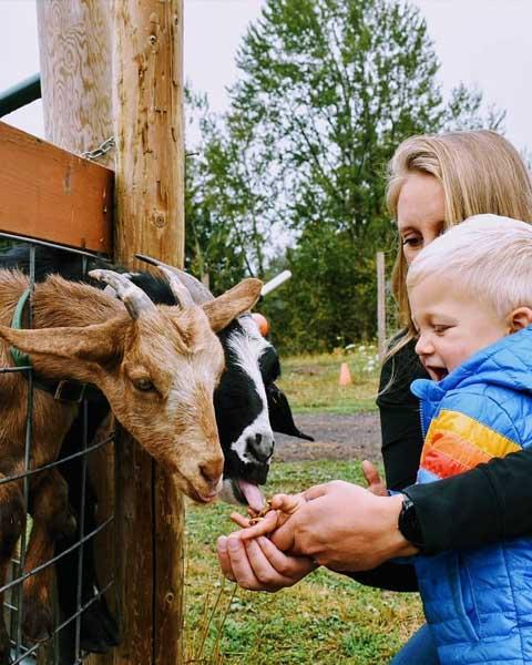 Animal Farm - Plumper Pumpkin Patch & Tree Farm