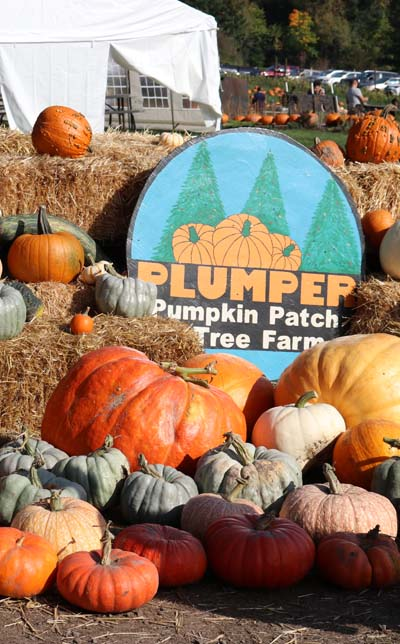 Plumper Pumpkin Patch - Oregon