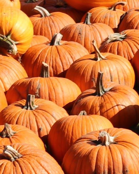Plumper Pumpkins